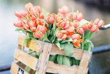 тюльпаны *_* / тюльпаны