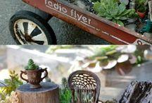 Plantas miniatura