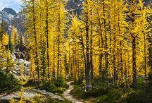 Forêts, ambiance / Ambiance de la nature, forêts/ références