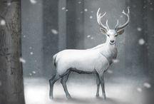Stags/Deer