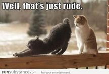Funny Cats / Funny Cats doing funny things