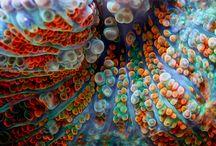 Corals / by Alessia Darani