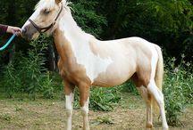 Palomino Chincoteague Ponies