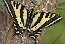 Schmetterlinge, Falter, Käfer und andere Insekten