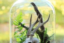 Terrariums and conservatories