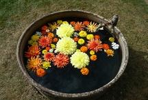 Septembre - Des fleurs, une saison