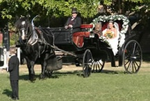 Wedding Ideas / Planning a wedding?  We offer stunning grounds in the Sierra foothills, with both indoor and outdoor sites to choose from, casual or formal settings accommodating guests of 20 to 1000. We have what you are looking for! Let us help you with your special day. (530) 621-5860