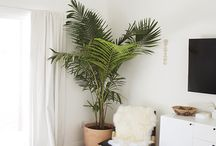 plants in decor