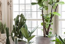 Home Inspiration: Greenhouse