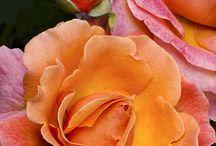 Flores / by Maria Elena Rumbaut