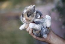 Viola's Bunnies