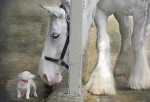 horse aşk