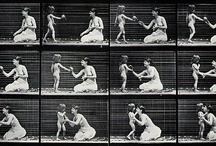 Aniamtion ref - Muybridge