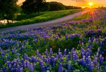 Texas / by Tracy Buchanan