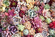 succulents / succulents, cactuses, my favorite plants