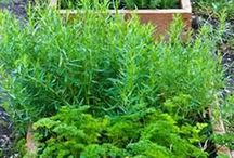 Trees, Herbs, Gardens