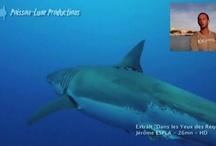 Vidéo & requins / Actualités, reportages, publicités, vidéos de passionnés trouvées sur le web.