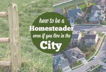 Homesteading in the city / by Dianna Auton