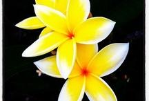 Flowers / by Luluslittleshop : )