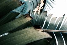 | Palms |
