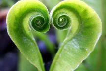 Hearts of Nature ♥