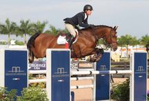 Dakota VDL / 2008 Stallion by Casall x Contender x Landgraf I / Stamm 104a Jumping 1.30m Approved KWPN, AHHA, BWP Owned by Hyperion Stud