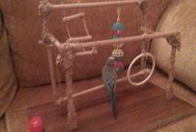 Muhabbet kuşu oyuncaklari