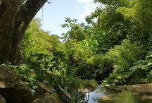 Grenada Rainforest