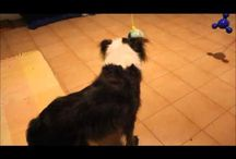 Mental stimulation games for dogs / How to phisically and mentally stimulate your dogs and give them jobs to do?