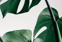 green / Green photos