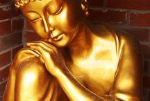 Buddha / by Toni Wolcott