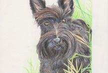 Portrait drawing animals color / Portrait drawings of animals. getekende portretten van dieren.