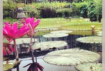 Longwood Gardens / See some of the beautiful gardens & displays that Longwood Gardens has to offer