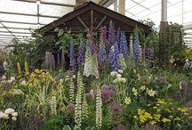 Ranunculaceae in garden / Ranunculus, Delphinium, Anemone, Paeonia............