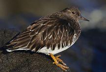 Birding LifeList
