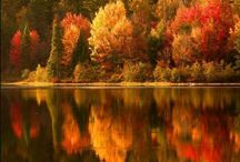 Autumn Bliss / by Shannon Reynolds