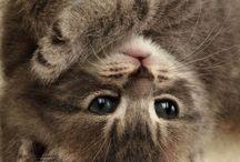 Gatti,gattini,gattoni