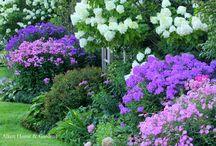 Blue/Purple flowers in garden