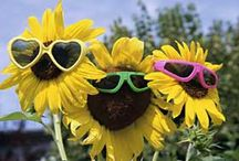 Summertime! / by Pam Gorski
