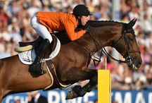 Cavallo X More   Verdi