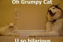 Funny stuff / by Amy Smedley