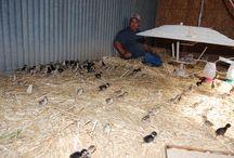 McDowell Hunting Preserve Birds / Variety of birds at McDowell Hunting Preserve