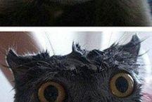cats /