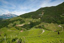 Territori / I territori di produzione e le vigne dei vini spumanti Cesarini Sforza