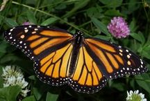 Butterflies / by Thomas Byers