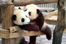Pandas for Panda / by Christine Ralston aka The Crafty Woman