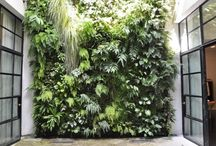 mur vegetaux