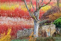 Wicker fields near Cuenca, Spain #HeathrowGatwickCars.com