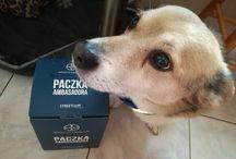 Kampania Bayer / Czy Twój pies nie może się doczekać pierwszych wiosennych spacerów? Pamiętaj, że wiosna to okres, w którym pojawiają się kleszcze, dlatego tak ważne jest, żebyś odpowiednio zadbał o swojego czworonoga. W kampanii marki Bayer dowiesz się więcej o groźnych pasożytach, jakimi są kleszcze. Z porcją wiedzy możecie ruszać z Twoim psem w nieznane! #ChronPrzyjacielaPsa #PiesBezKleszcza #DbamWiecChronie #Bayer