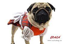Hundedirndl Coala / Unsere Hundedirndl sind ab jetzt in unserem online shop verfügbar. Happy Oktoberfest :)